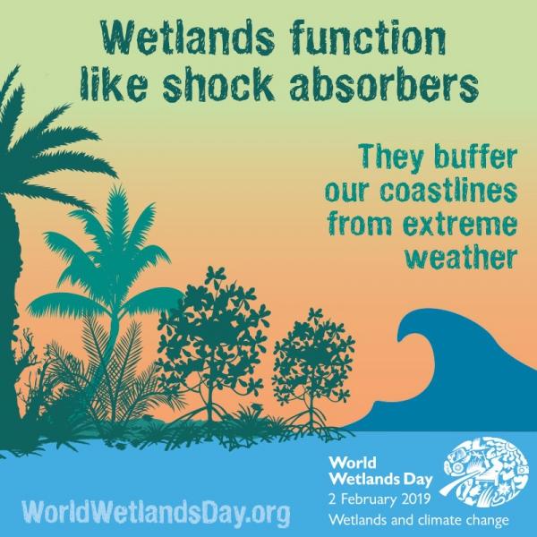 海岸濕地能吸收衝擊能量,為人們緩衝極端氣候的危害。