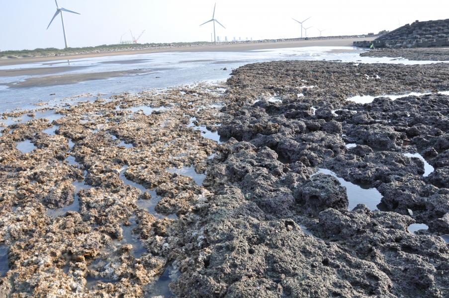 右側為藻礁原有樣貌,左側為遭破壞後剷除的命案現場