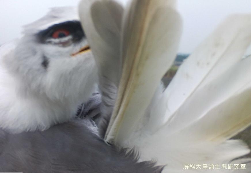 「有秘密也不會跟你說」,攝影:屏科大鳥類生態研究室