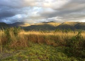 知本濕地的河口清晨。圖:荒野保護協會