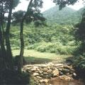 溪旁的梯田。