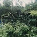 藏在樹叢中的石屋廢墟。