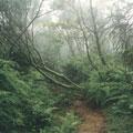 穿越復原中的森林