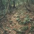 森林中的大坪古道