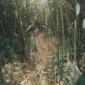 箭竹林中的小路